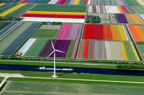 laud8-tulipscape1