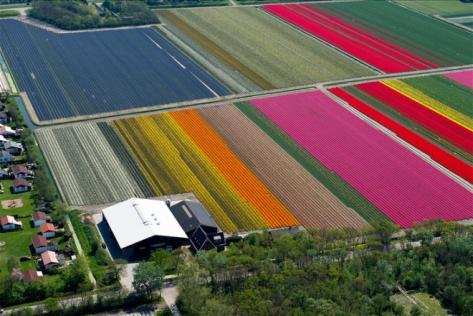 laud8-tulipscape2