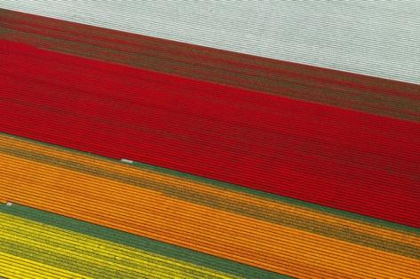 laud8-tulipscape4
