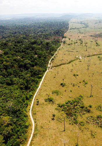 Deforestation in Brazil / Wired